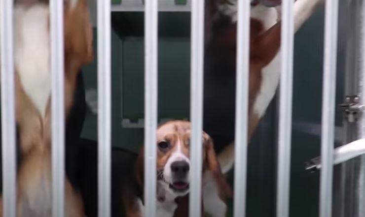 Schreckliches Video: Unterstützten Sie die Petition gegen die schreckliche Behandlung von Tieren bei Vivotecnia in Madrid