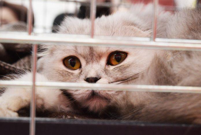 Versteckte Katzen Käfige